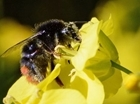Multi-million pound bee project gets green light from EU