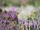 Hotly-debated issues surrounding grouse shooting tackled in new book