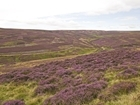 Grouse moor managers wrongly blamed for flooding devastation: Our letter to The Guardian