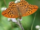 More than 4300 butterflies from 27 different species recorded at Rotherfield