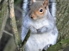 How can we be green and vegetarian? Our letter on grey squirrels to the Mail Online