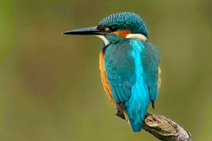 Kingfisher Game And Wildlife Conservation Trust