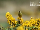 Big Farmland Bird Count (BFBC) gets the thumbs up by Welsh farmers