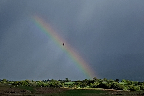 Curlew and rainbow (Credit: James Roberts)
