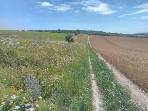 Martin Down New Wildflower Margin , Credit J Brooks GWCT