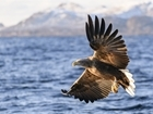 White-tailed eagle reintroduction planned in eastern England