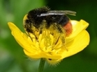 Neonics – becoming a bee in a bonnet? The next instalment