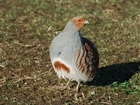 Grey Partridge Farm Walk At Award-Winning North Yorkshire Farm
