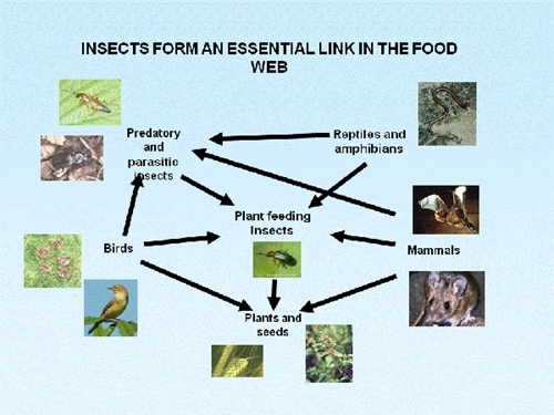 Insects Cat Food