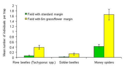 Invertebrate numbers in fields with and without 6m grass/flower margins