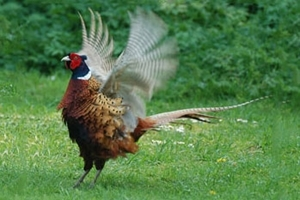 GWCT shoot raffle will be Fantastic for wildlife research