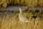 Exciting new Curlew partnership announced