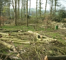 Woodland Management Day, Leicestershire image