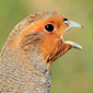 Changes in partridge numbers