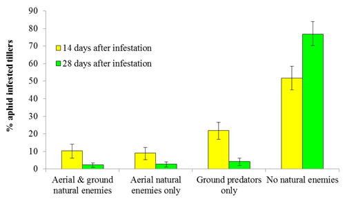 Proportion of aphid infested wheat tillers in the presence of different guilds of predators