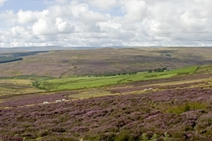 Grouse moor (Credit: David Mason)