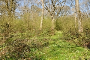 Coppice Understorey