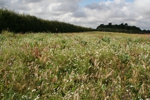 Wide strip of good wild bird seed mixture