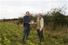Providing extra winter food is a winner for partridge conservation in Cumbria