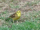 UK Farmers urged to get ready for the 'Biggest' Farmland Bird Count