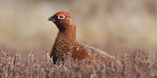 Grouse Season Briefing