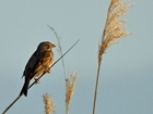 Countdown to the Big Farmland Bird Count