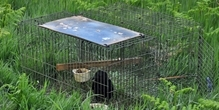 Response to Petition P-05-813 on banning the use of Larsen traps