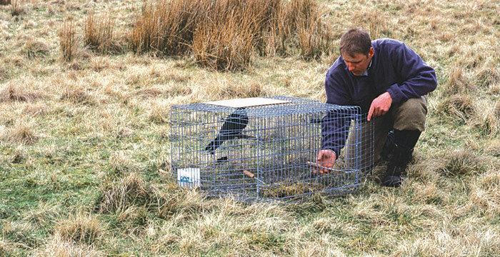 Scottish Natural Heritage trapping study