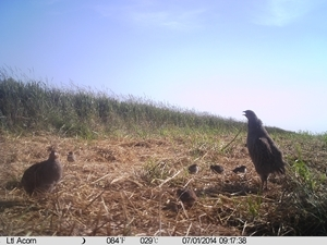 Cameras are excellent at capturing brood success
