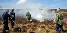 How does an increase in heather cover affect the red grouse population?