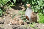 Plea for partridge forms to be returned