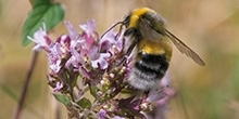 Bees and neonicotinoids