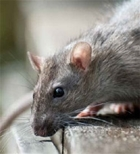 New course allows gamekeepers to continue using rodenticides