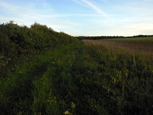 Farmland hedge managed for grey partridges with 4m grass margin and three-year-old wild bird mix