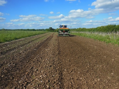 The preparation of a good seed bed together with the right timing of drilling are key for the successful re-establishment of wild flower mixes, especially where they are grown at the same location over many years.