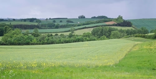GWCT's Allerton Project farm