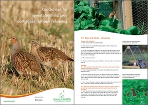 Grey partridge releasing guide