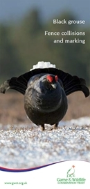 Black Grouse Fence Collisions