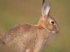 Defra want to scrap the Rabbit Clearance Order - what do you think?