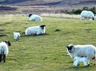 Preparing for lambing season