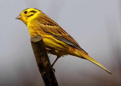 yellowhammer game and wildlife conservation trust