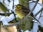 The Big Farmland Bird Count is nearly here! Are you ready?
