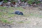 Spaces are selling fast for rodenticide training courses