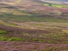 Heather burning - new research raises important questions