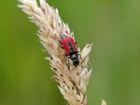 Bijou thatched cottages sought by beetles