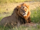 IUCN briefing on trophy hunting