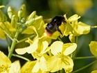 Neonics – becoming a bee in a bonnet?