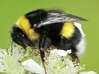 CFE set to deliver series of pollinator events across UK