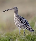 Curlew work underway thanks to kind support