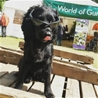 Scottish Game Fair 2016 in pictures